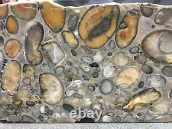 J DAY P07 ELSTREE Hertfordshire Puddingstone Polished Rock AL4 Pudding Stone
